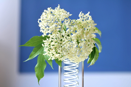 Elderflower blue