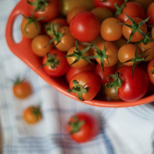 Tomato square