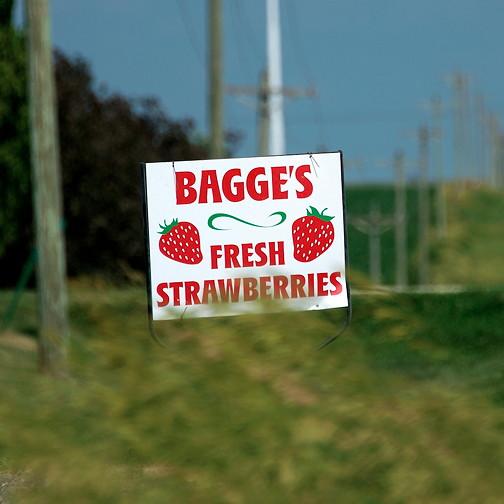 Strawberry jam 16