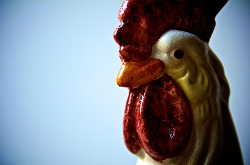 Chickens (4)